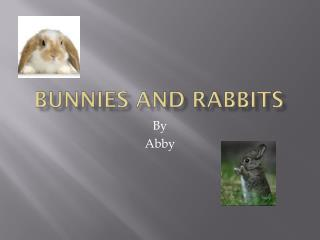 Bunnies and Rabbits