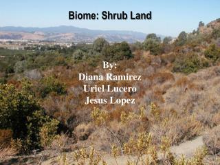 Biome: Shrub Land