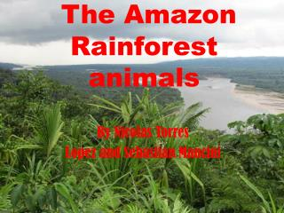 The  A mazon Rainforest animals
