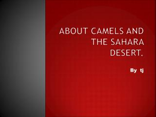About camels and the Sahara desert.