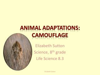 Animal adaptations: camouflage