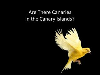 Are There Canaries  in the Canary Islands?