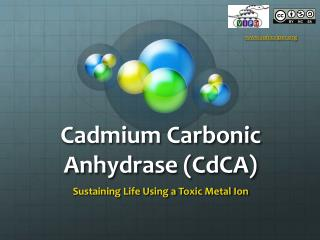 Cadmium Carbonic Anhydrase ( CdCA )