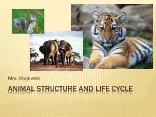 Animal structure and life cycle
