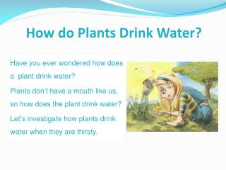 How do Plants Drink Water?