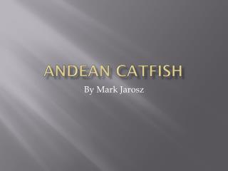 ANDEAN CATFISH