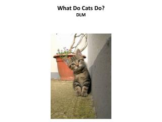 What Do Cats Do? DLM