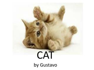 CAT by Gustavo