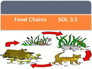 Food Chains       SOL 3.5
