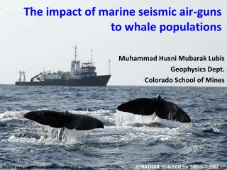 The impact of marine seismic air-guns to whale populations