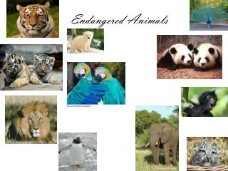 Endangered Animals