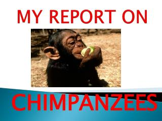 MY REPORT ON
