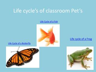 Life cycle's of classroom Pet's