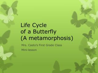 Life Cycle  of a Butterfly (A metamorphosis)