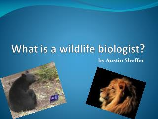 What is a wildlife biologist ?