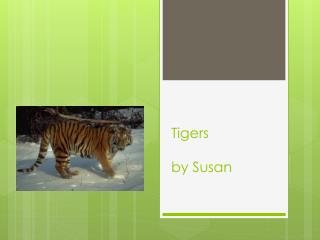 Tigers by Susan