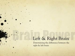 Left & Right Brain