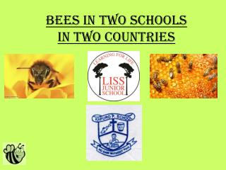 Bees in Two Schools In two countries