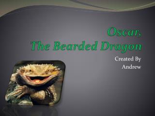 Oscar, The Bearded Dragon