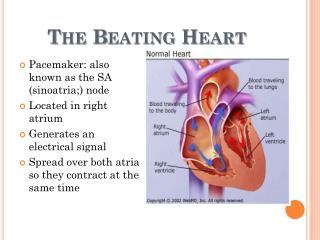 The Beating Heart