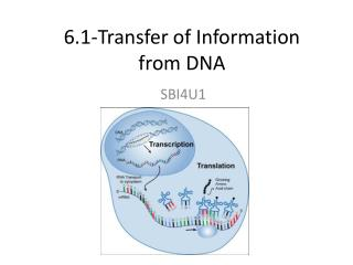 6.1-Transfer of Information  from DNA