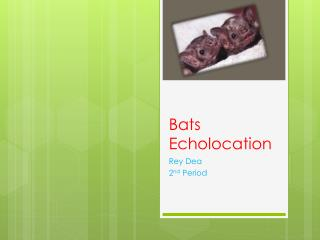 Bats	                   Echolocation
