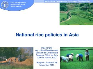 National rice policies in Asia