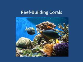 Reef-Building Corals