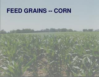 FEED GRAINS -- CORN
