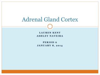 Adrenal Gland Cortex