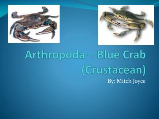 Arthropoda  – Blue Crab (Crustacean)
