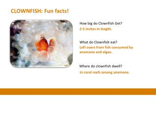 CLOWNFISH: Fun facts!