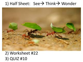 1) Half Sheet:   See  Think Wonder 2) Worksheet #22 3) QUIZ #10