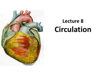 Lecture 8 Circulation