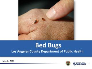Bed Bugs Los Angeles County Department of Public Health