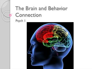 The Brain and Behavior Connection