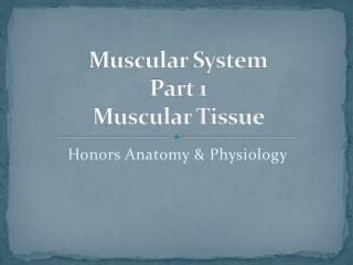 Muscular System Part 1 Muscular Tissue