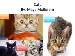 Cats By: Maya Molldrem