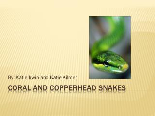 Coral and copperhead snakes