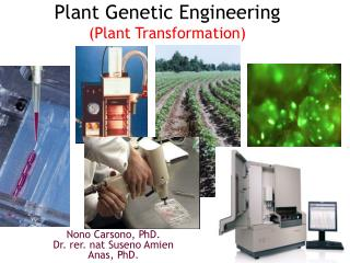 Plant Genetic  Engineering ( Plant Transformation)