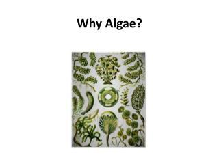 Why Algae?