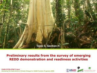 Preliminary results from the survey of emerging REDD demonstration and readiness activities
