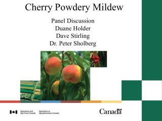 Cherry Powdery Mildew