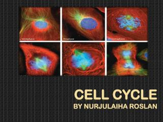 CELL CYCLE by  nurjulaiha roslan