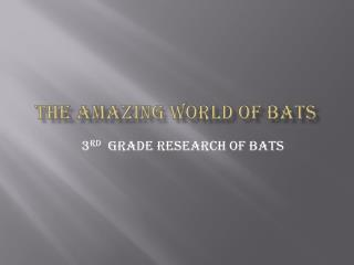 The amazing world of bats