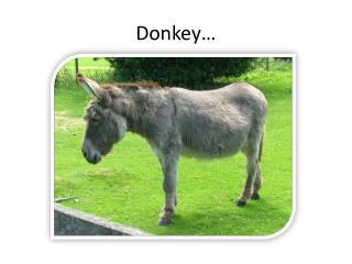 Donkey…