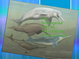 AN  Endangered  SPECIES  THE GANGES RIVER DOLPHIN