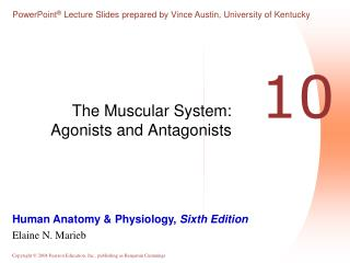 The Muscular System: Agonists and Antagonists