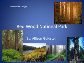 Red Wood National Park