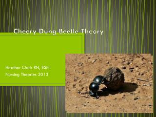 Cheery Dung Beetle Theory